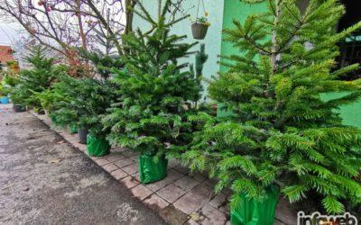 Tony vrtni centar Đakovo – Prodaja borova u Đakovu