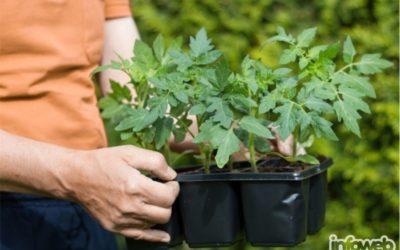 Tony vrtni centar Đakovo – Prodaja sadnica povrća u Đakovu