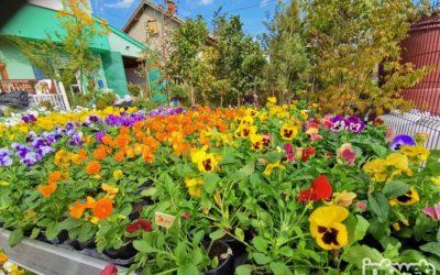 Vrtni centar Tony Đakovo – Prodaja cvijeća u Đakovu