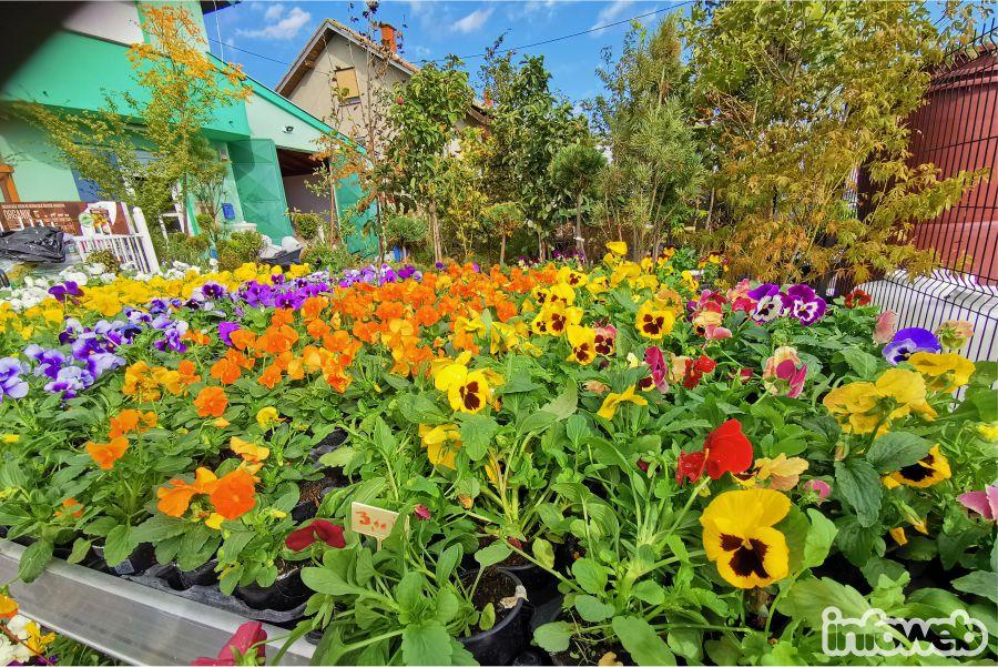 Tony vrtni centar i poljopribredna ljekarna Đakovo